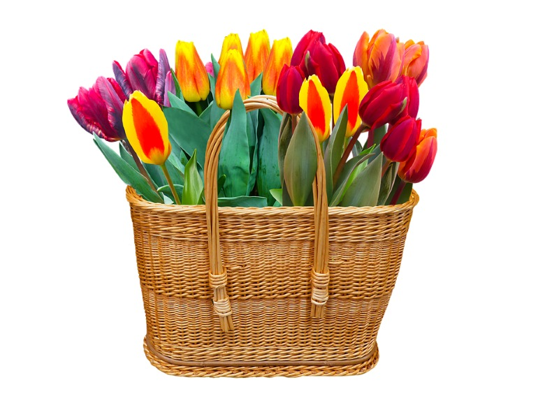 Basket of tulips